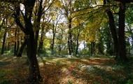 Intermmediate forest
