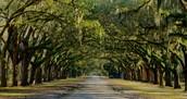 Our Capital, Savannah, is Truly a Paradise!