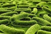 Diseases like TB