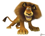 there are many lions they gives us a show and on the end is there a lion fight