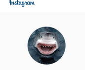 Join Mrs. Nelson's Science class on Instagram!