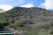 Mount Hooriberg