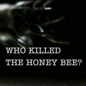 Who killed the honey bee?