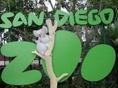 Zoo Field Trip!