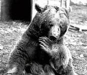 Informacje o niedźwiadku