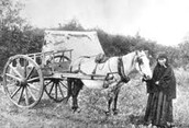 Black and White Photo Of Red River Cart