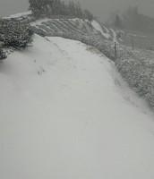 大雪紛飛的茶園