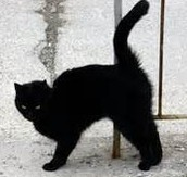 a black cat i think..........