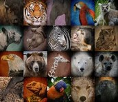 Earth Endangered Species
