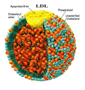 Bad Cholesterol (LDL)
