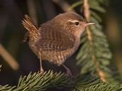 Птичка в лесу