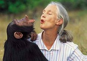 Jane Goodall:  Reading Closely