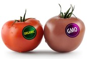 Scary Fact about GMO's!