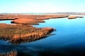 Why should we work to restore the wetlands on the coast of North Carolina?