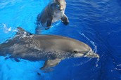 Dolphins in the show
