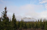 A picture of the Taiga in Alaska.