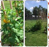 Graber Garden