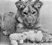 Animal/Human Relationship