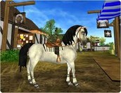 Horses in Star Stable