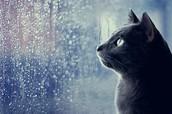Cat Watching The Rain
