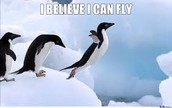 it can fly