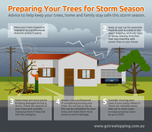 Preparing Your Trees For Storm Season