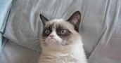 Grumpy Cat in London