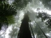 Cloud forest in Honduras.