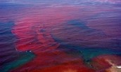 The Bacteria in the Red Sea