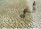 Desertifica ción