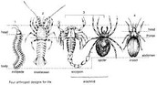The Arthropod