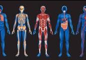 Organism: human body