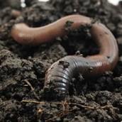 Earthworm Environment