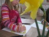 daffodils in oil pastel