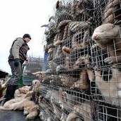 Several animals kept in cages stacked on top of each other.