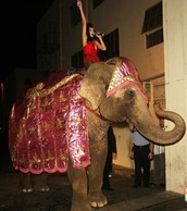 Katy Perry riding Elephant!!
