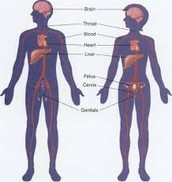 Causes of Disorder