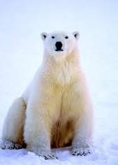 Arctic Exploration