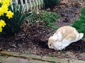 Bunny Behavior