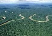La selva de Amazon