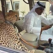 Dubai Pets