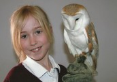 You could look up online to get an adorable barn owl on your hand!