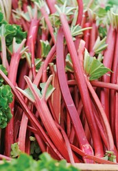What are some benefits of eating rhubarb