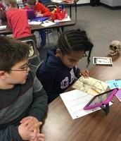 Analyzing Artifacts