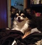 Little Brody