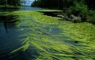 Green River Grasses
