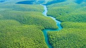 The graceful Amazon river