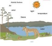Biotic Factors