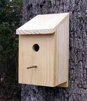 Bird and Bat Houses
