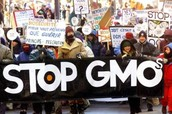 People protesting against GMOs